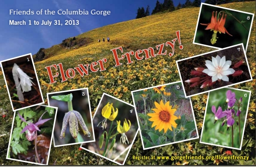 FriendsoftheColumbiaGorge_FlowerFrenzy2013